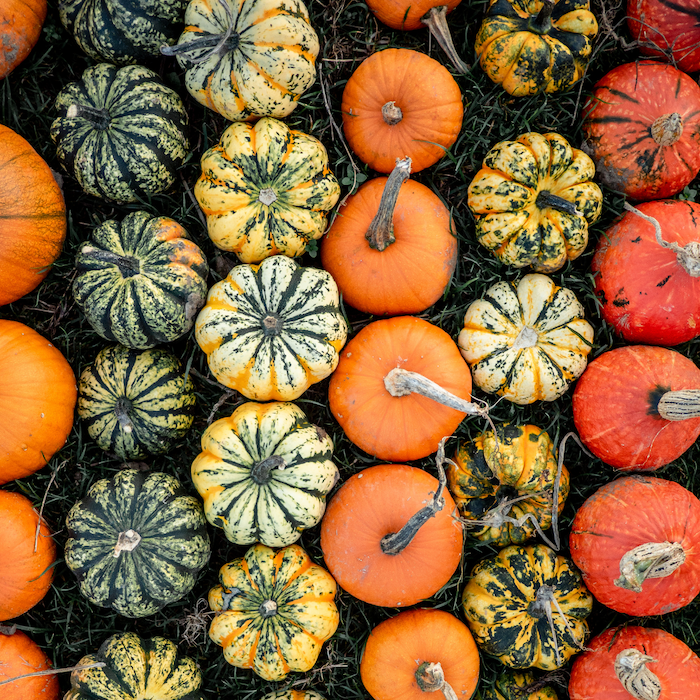 various pumpkins in patch