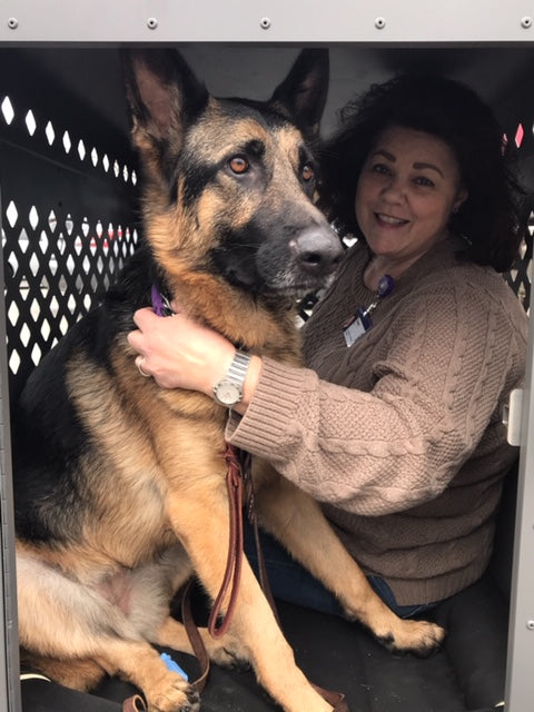 german shepherd and friend in giant impact dog crate