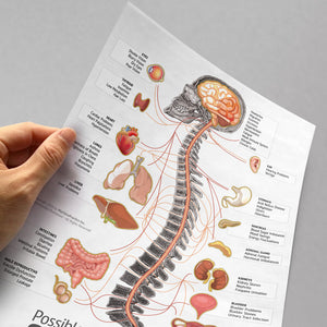 Letter Size Organ, Spine and Nerve Chart Tear-Off Pads