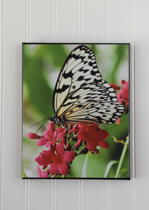 butterfly canvas photo