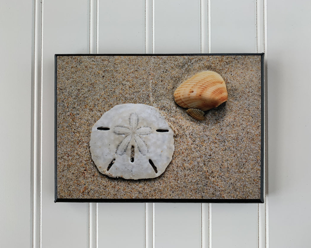 Sand Dollar Canvas Photo | Beach Decor | Beach Lover Gift