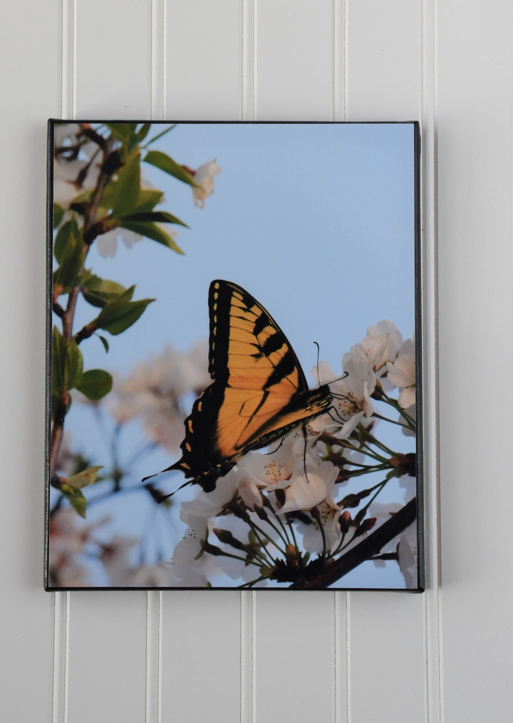 yellow butterfly canvas photo