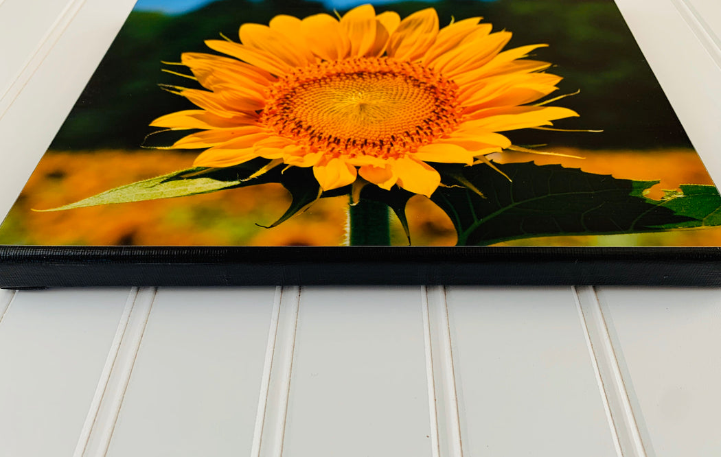 Sunflower Canvas Photo | Nature Lover Gift | Housewarming Gift,