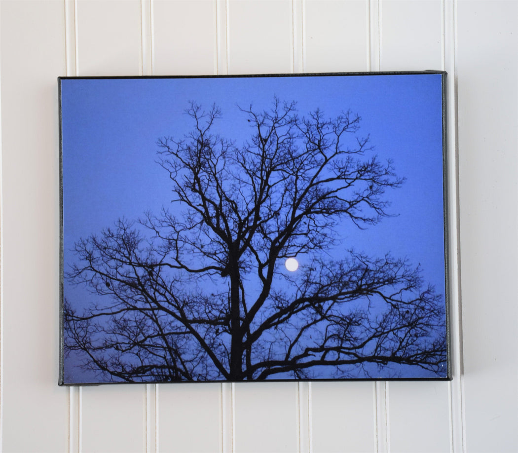 Tree Silhouette with Moon Canvas Photo | Gardener Gift