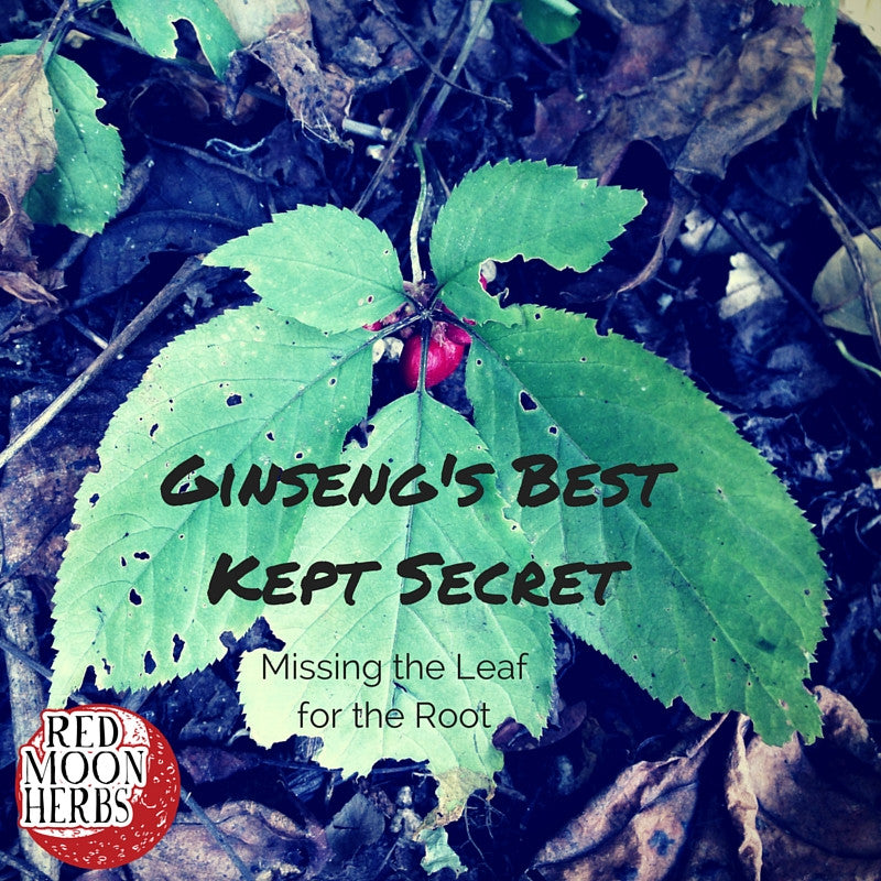 Ginseng's Best Kept Secret: Missing the Leaf for the Root