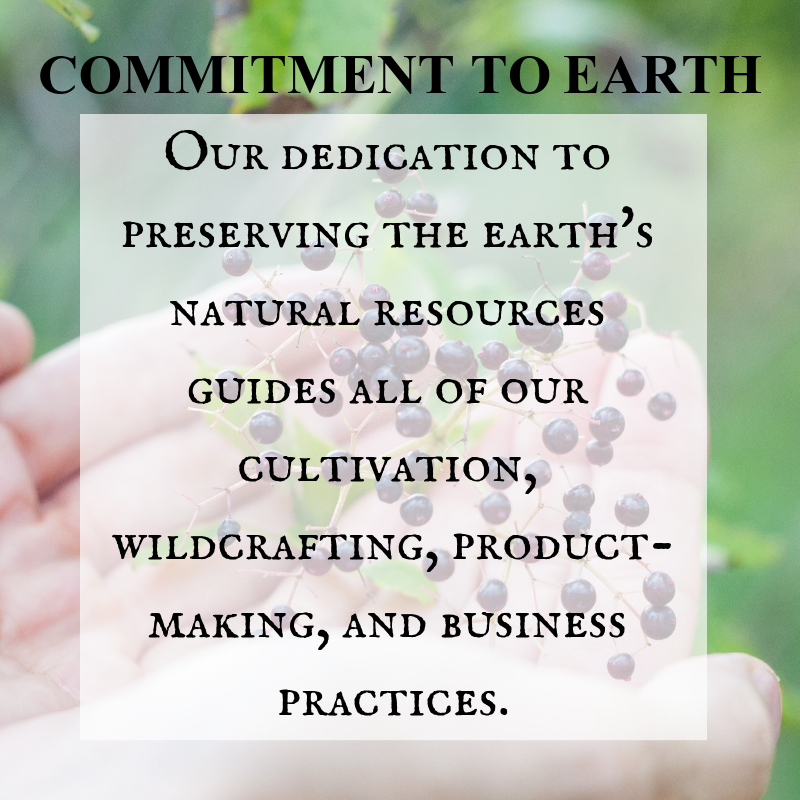 Commitment to Earth Organic Cultivation and Wildcrafting Herbs