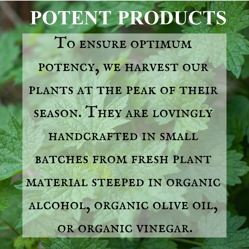 Potent Herbal Products Harvested and Handcrafted in Small Batches