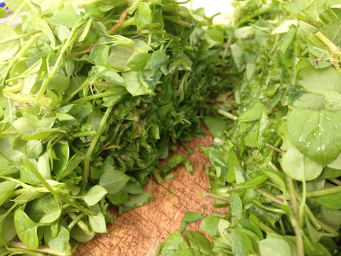 Chickweed Fresh Herb Poultice for Eye Health