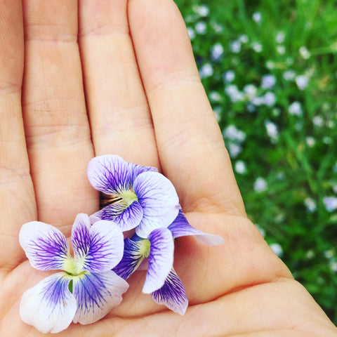 Violet Flowers in a Hand