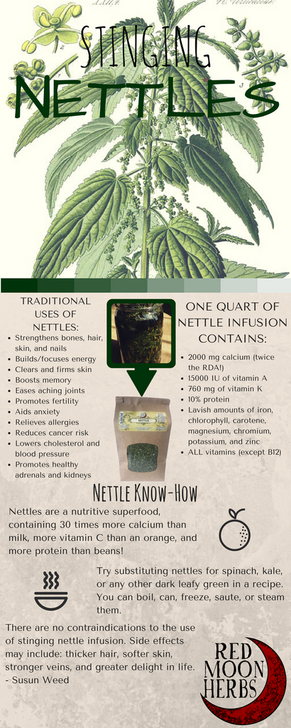 The Medicinal Benefits of Stinging Nettle Herb Nourishing Herbal Infusion