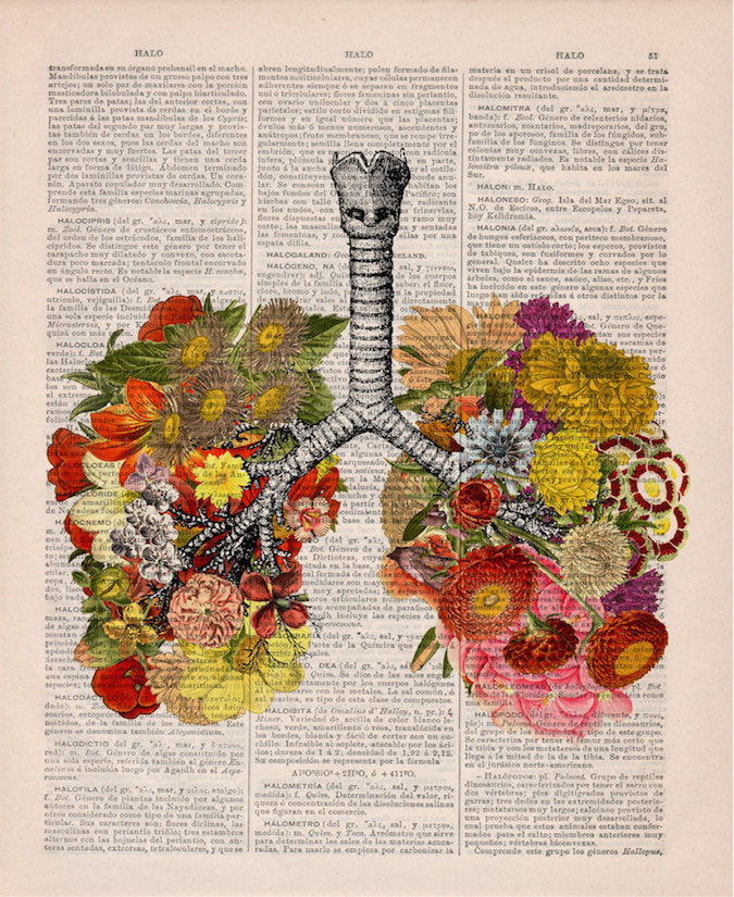 Herbal flowers in the lungs