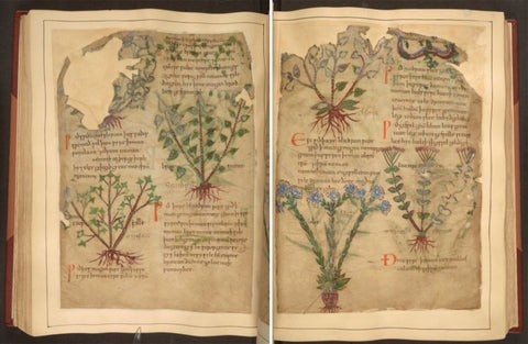 Medieval Book of Herbal Medicinal Remedies