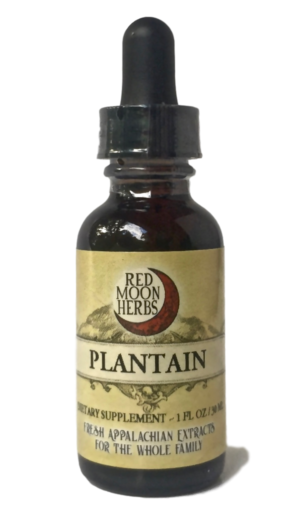 Plantain (Plantago major/lanceolata) Herbal Extract for Skin, Lung, and Respiratory Health