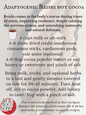 Adaptogenic Reishi Mushroom Hot Cocoa Recipe for Wellness