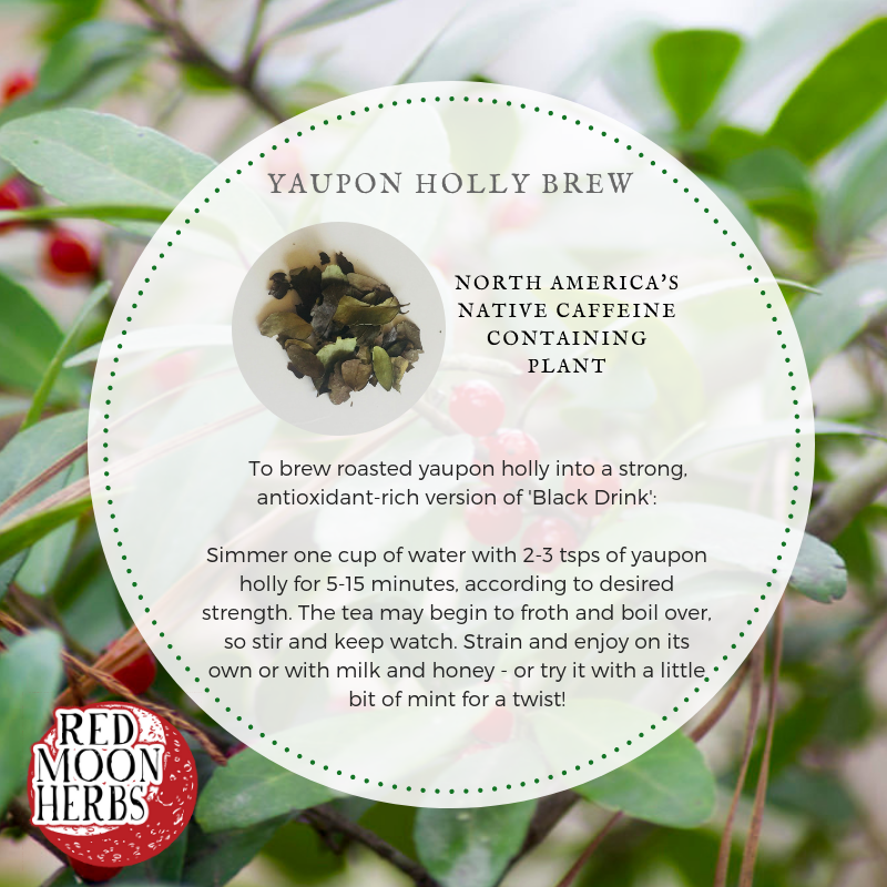 Yaupon Holly Recipe for Caffeinated Tea