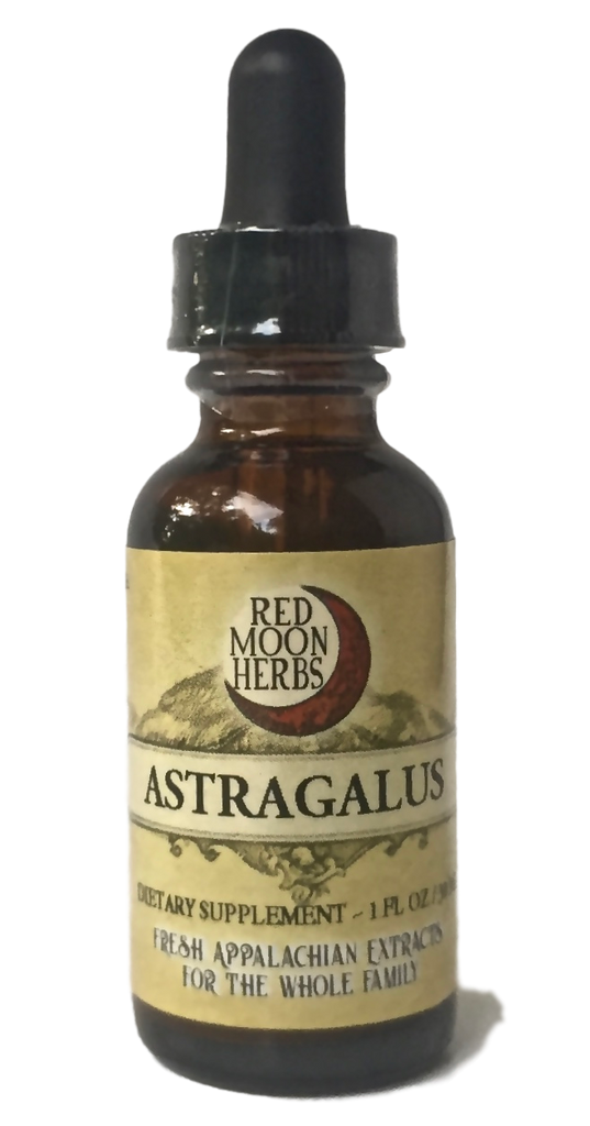 Astragalus (Astragalus membranaceus) Extract Bottle for Immune Health