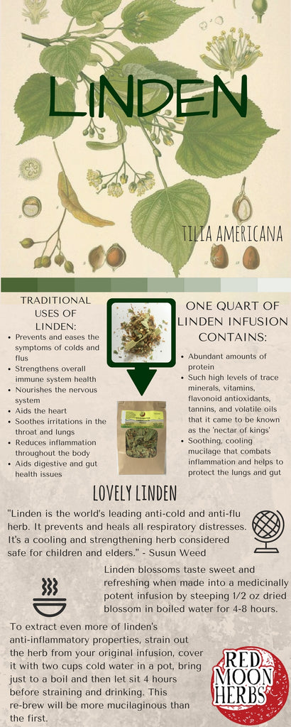 Linden Flower Blossom Infusion or Tea Benefits and Nutritional Facts