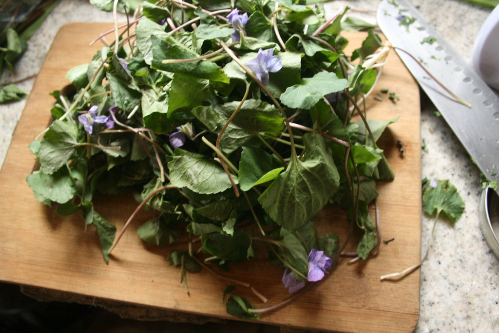 Violet (Viola spp.) Fresh Wild Plant Herb Chopping Leaf Flower Blossom