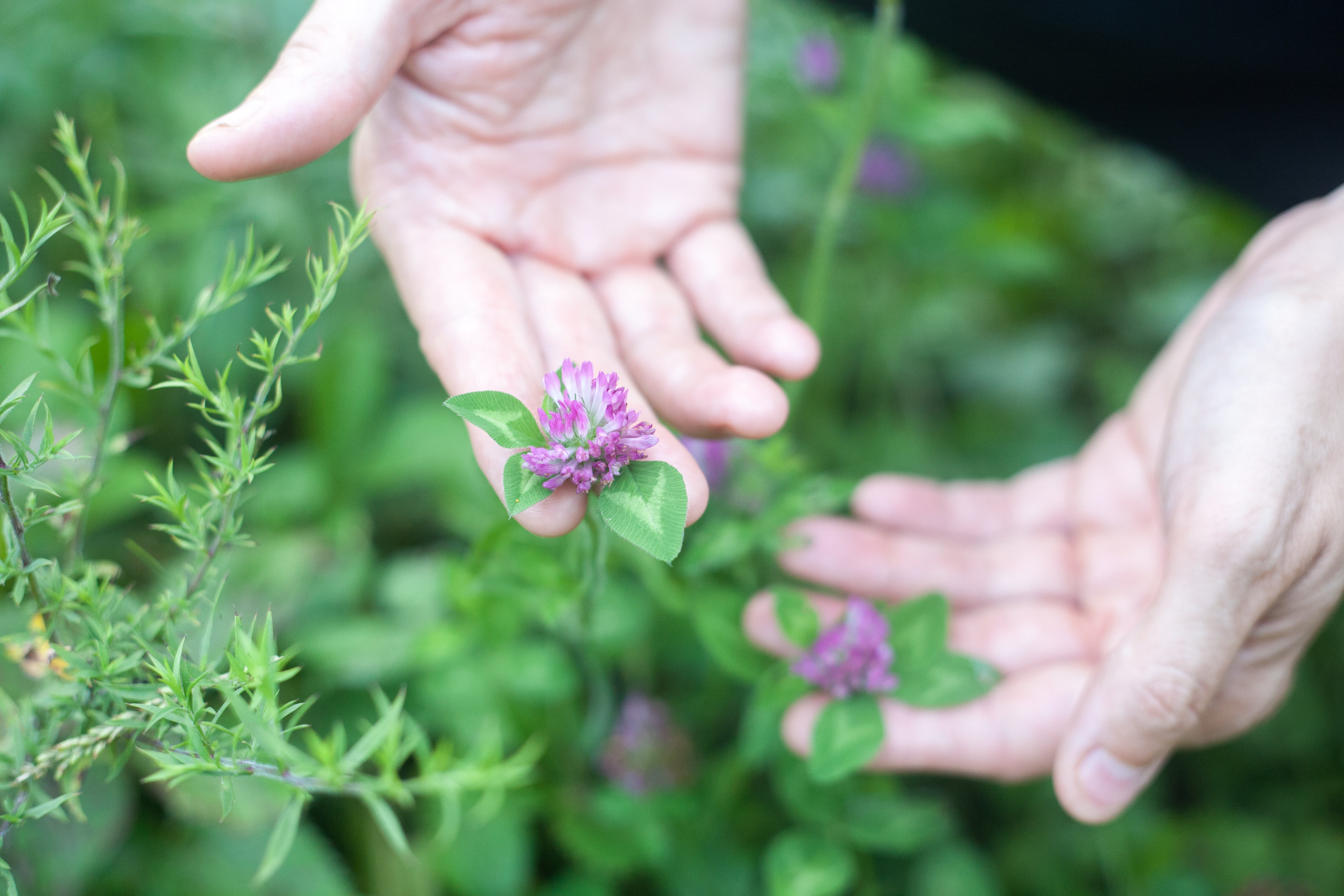 Each herb is harvested by hand at its peak potency