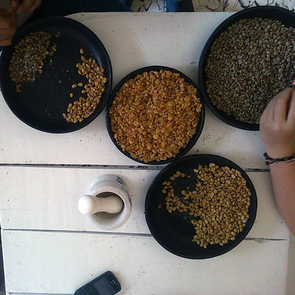 Coffee Roasting and Tasting at Café Del Mural