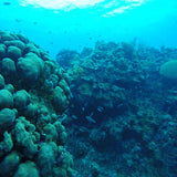 Scuba Diving In San Andres - Juan Ballena | Travel Experiences in Cartagena - 3