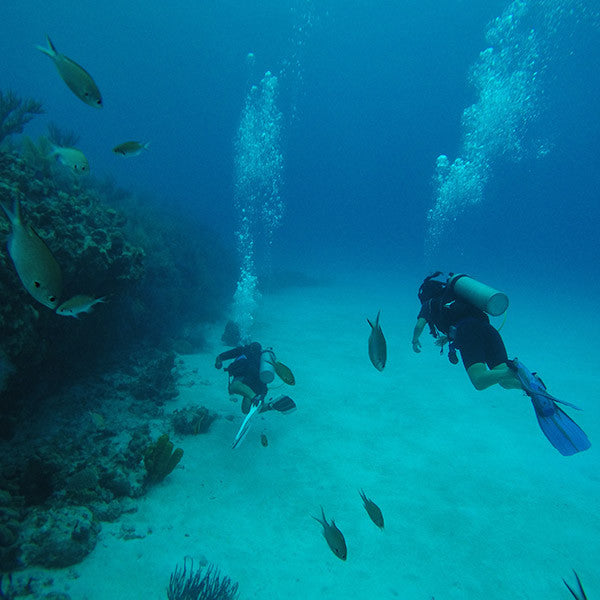 Scuba Diving In San Andres