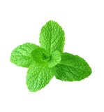 Spearmint doTERRA 15 mL Essential Oil