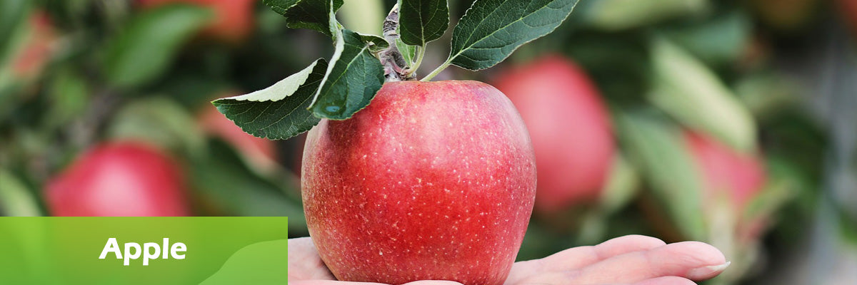 superfood apple