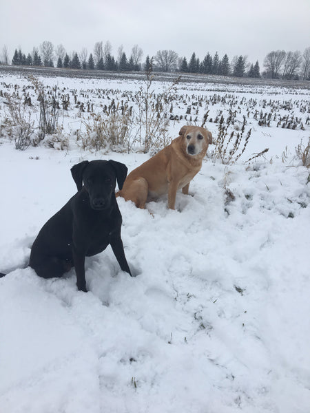dogs outside in michigan winter