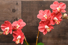 Hand Sculpted Clay Flowers Art Home Decor Handmade Large Red Phalanopsis Orchid Hand Painted Flower
