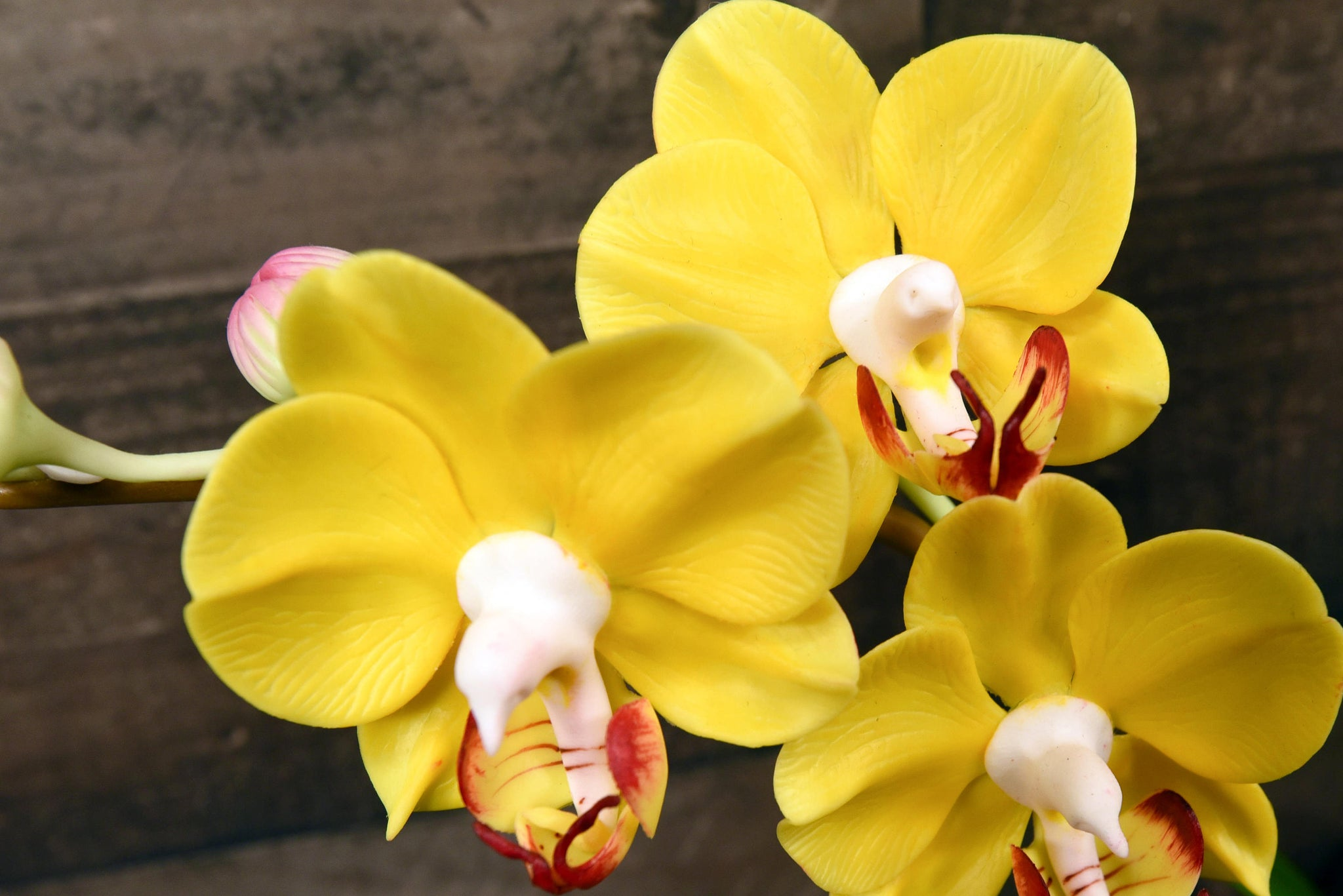 Hand sculpted clay flowers home decor handmade large phalanopsis hand sculpted clay flowers home decor handmade large phalanopsis three stem yellow orchid hand painted flower mightylinksfo