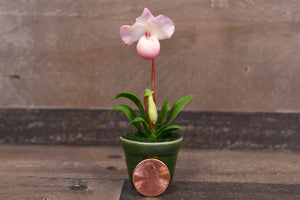 Clay Flowers Handmade Mini Orchid Lady's Slipper White Pink Adorable Hand Painted Flower
