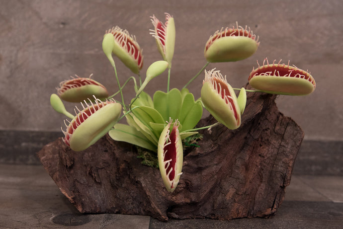 Hand Sculpted Clay Flowers Home Decor Handmade Medium Realistic Carnivorous Plant Venus Fly Trap Hand Painted Flower