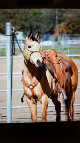 Move Around Horse Tie System