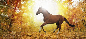 Healthy Critters Radio: Breeding Better Horses, Immune Support, Cold Weather Horse Care