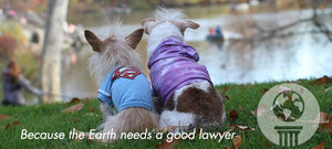 BioStar Gives Back: Earth Justice and Susie's Senior Dogs