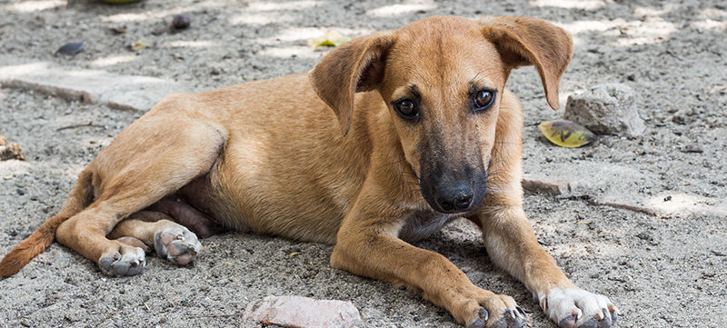 BioStar Gives Back: Second Chance Animal Rescue of Puerto Rico