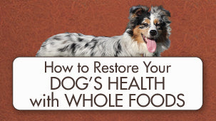 Whole Food diet for Dogs with BioStar
