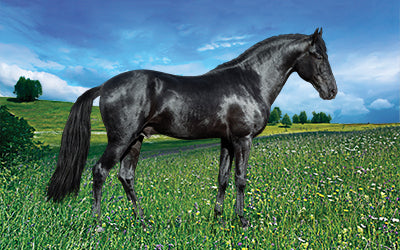 Equine Consultations from BioStar US