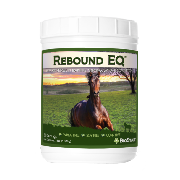 Rebound EQ for horse recovery | BioStar US