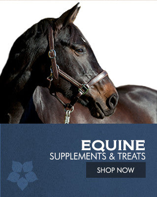 Equine Supplements