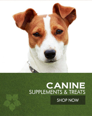 Canine Supplements