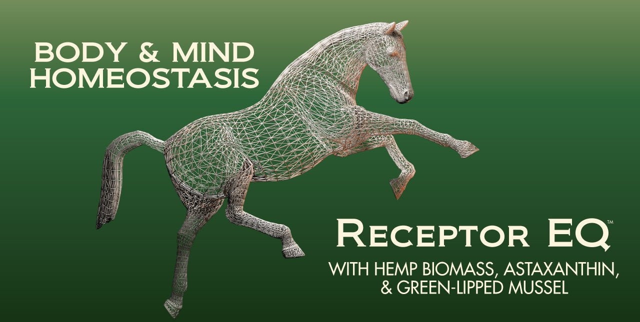 BioStar US offers your horse whole body homeostasis with real plant ingredients