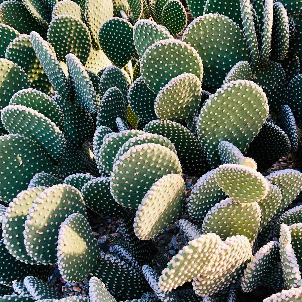 Colour story | The who's hue of a cactus forest