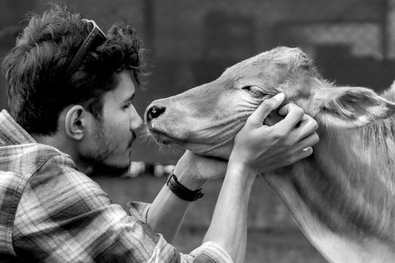 Compassion to Animals