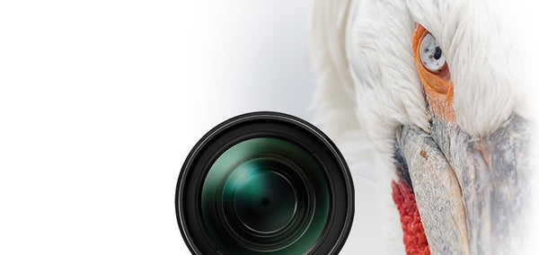 claim up to £200 cashback on selected Olympus lenses at Cambrian Photography, Colwyn Bay