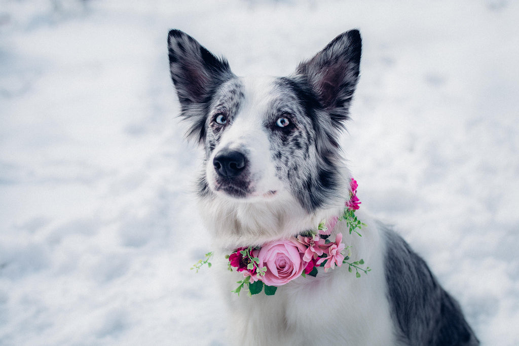 Pink Floral Dog Collar Flower Collar For Dogs Collar For Pets Flower