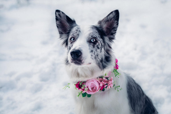Pink floral dog collar Flower collar for dogs Collar for pets Flower accessories for pets Wedding accessories Wedding collar for dog
