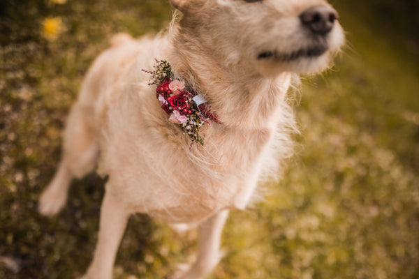 Floral application for dog's collar Collar for dogs Collar for pets Flower accessories for pets Wedding accessories Wedding collar for dog