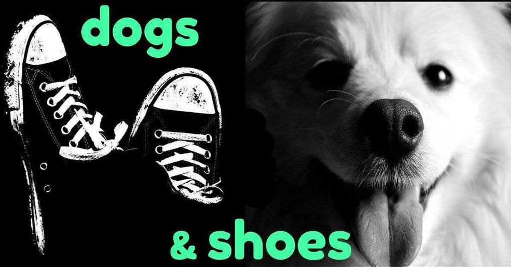 Do You Know The Amazing Things Dogs And Shoes Have In Common?